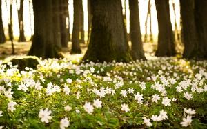 Красивые цветы в лесу