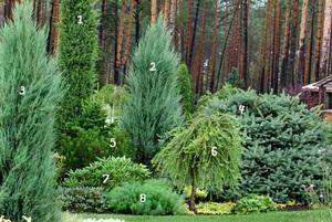 Высокоскоростные» лиственные породы
