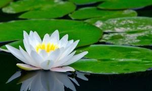 Водные растения на озере