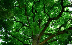 Что такое крона дерева для детей || Крона дерева это для детей
