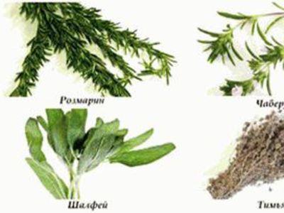 Многолетние пряные травы для огорода и подоконника