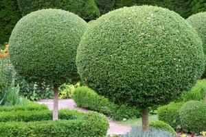 Выращивание декоративных деревьев и кустарников