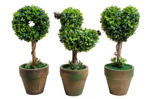 Правила посадки декоративных деревьев