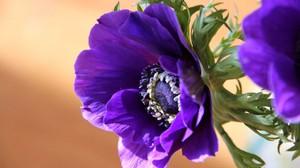 Посадка и размножение цветка