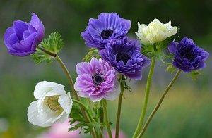 Общая характеристика цветка