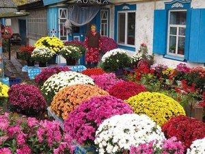 Какие красивые цветы посадить на даче