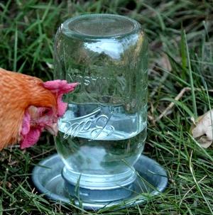 Поилка для кур из пластиковой бутылки за 5 минут