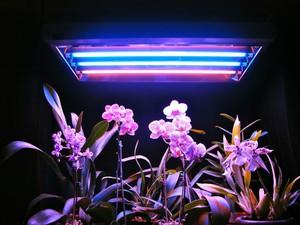 Лампы для подсветки растений в домашних условиях