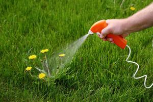 Для чего нужны гербициды
