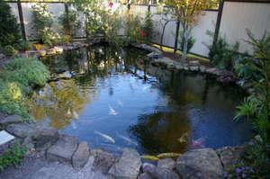 Какую рыбу лучше разводить в маленьком пруду