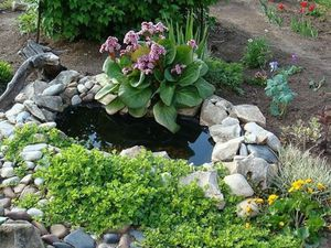 Цветок бадан для сада