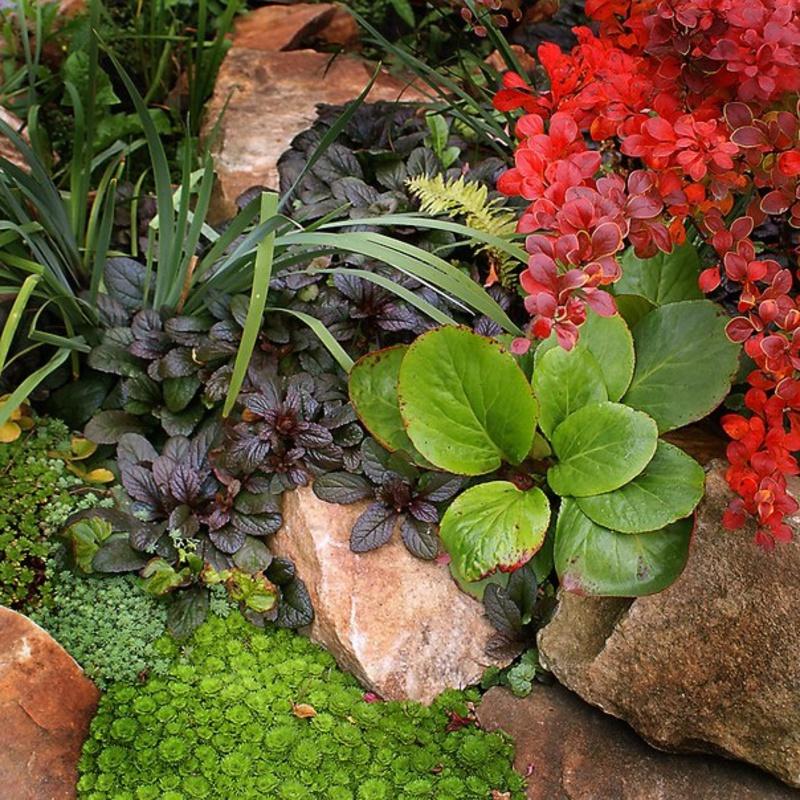 важнейшая характеристика цветы любящие тень и влагу фото босоножки широкую ногу