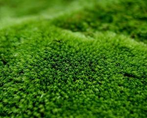 Как растет мох