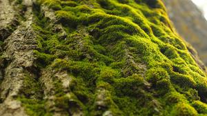 Как размножить мох