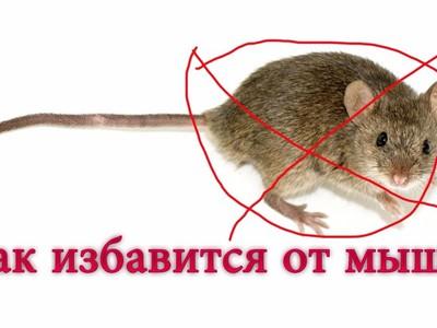 Как избавиться от мышей в частном доме и как бороться в квартире