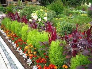 Декоративные садовые растения