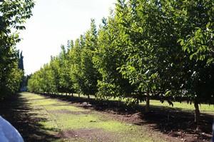Высадка деревьев в грунт