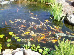 При каких условиях можно разводить рыбу в прудах