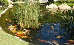 Как создать условия для разведения рыбы в пруду