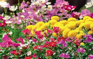 Однолетки, цветы