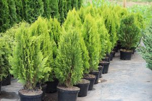 Выбор сортов растений