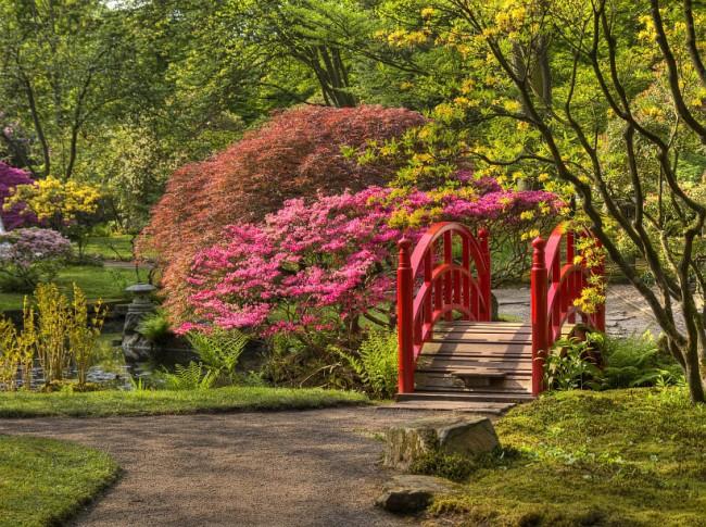 Японский кустарник спирея