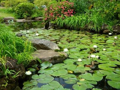 Красивый цветок водоемов