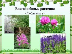 Особенности культур для сырой почвы