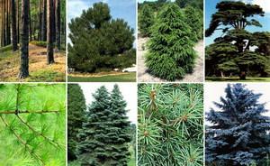 Принципы озеленения территории