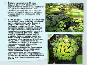 Функции водных растений
